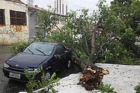 SAO PAULO, SP, 18-02-2013, CHUVA, ALAGAMENTO E QUEDAS DE ARVORES.  Sao Paulo teva na tarde dessa Segunda-feira uma tarde de caus. Uma frte tempestade caiu sobre toda cidade. Na foto as duas arvores que cairam e atingiram dois veiculos na Rua Leme da Silva no bairro da Mooca. FOTO: Luiz Guarnieri/ Brazil Photo Press.
