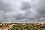 Domestic Cattle (Bos taurus) in altiplano, Ciudad de Piedra, Andes, western Bolivia
