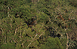 Forest tree canopy jungle tropical rainforest  . . .Guatemala....