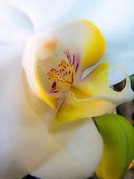 Orchid portrait