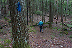 Hiker in the Richard Hodson Preserve, Camden, Maine, USA