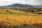 Vinyards surrounding Turckheim, Alsace, France
