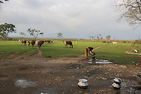 India – West Bengal: Outskirts of Pakka Line, one of several villages hosting the workers of Mogulkata Tea Estate, in the Dooars region. There are 276 tea gardens in West Bengal, divided between the regions of Darjeeling, Terai and Dooars.
