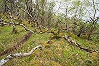 Carnach Woodland Wanderweg (Carnach Woodland Trail) nahe der Ortschaften Milltown und Applecross.<br /> Der Wanderweg fuehrt durch ein Gebiet der vor ca. 4.000 Jahren als mystischer Ort galt und von zahlreichen unterirdischen Energielinien durchzogen ist.<br /> 23.5.2015, Highlands/Schottland<br /> Copyright: Christian-Ditsch.de<br /> [Inhaltsveraendernde Manipulation des Fotos nur nach ausdruecklicher Genehmigung des Fotografen. Vereinbarungen ueber Abtretung von Persoenlichkeitsrechten/Model Release der abgebildeten Person/Personen liegen nicht vor. NO MODEL RELEASE! Nur fuer Redaktionelle Zwecke. Don't publish without copyright Christian-Ditsch.de, Veroeffentlichung nur mit Fotografennennung, sowie gegen Honorar, MwSt. und Beleg. Konto: I N G - D i B a, IBAN DE58500105175400192269, BIC INGDDEFFXXX, Kontakt: post@christian-ditsch.de<br /> Bei der Bearbeitung der Dateiinformationen darf die Urheberkennzeichnung in den EXIF- und  IPTC-Daten nicht entfernt werden, diese sind in digitalen Medien nach &sect;95c UrhG rechtlich geschuetzt. Der Urhebervermerk wird gemaess &sect;13 UrhG verlangt.]