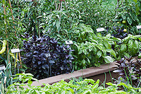 Organic herb and vegetable garden with plant labels, mixed basils and peppers