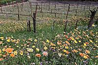 Flowers growing in vineyard, Beringer Winery, Napa Valley, California