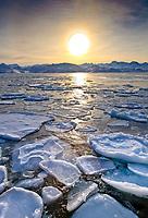pancake ice on the sea near Sisimiut, Greenland, Atlantic Ocean