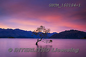 Tom Mackie, LANDSCAPES, LANDSCHAFTEN, PAISAJES, photos,+Lake Wanaka, New Zealand, Tom Mackie, Wanaka Tree, Worldwide, atmosphere, atmospheric, beautiful, cloud, clouds, color, color+ful, colour, colourful, holiday destination, horizontally, horizontals, light, peaceful, purple, red, reflecting, reflection,+reflections, restoftheworldgallery, scenery, scenic, silhouette, sunrise, sunset, time of day, tourist attraction, tranquil,+tranquility, tree, trees, vacation, water, water's edge, weather,Lake Wanaka, New Zealand, Tom Mackie, Wanaka Tree, Worldwid+,GBTM160184-1,#l#