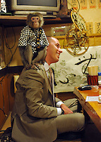 Fuku-chan, 6, a Japanese monkey waiter, climbs onto a foreign guests head, in an Izakaya bar in north of Tokyo, Japan. The six year old monkey looks after the guests hot towels by taking them from the steamer oven and delivering them to all guests. The bar is extremely popular amongst people from all over Japan who come to see the monkey