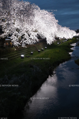 April 12, 2017, Tokyo, Japan - Fully bloomed cherry blossoms are lit up alongside a river in Tokyo on Wednesday, April 12, 2017. Some 40,000 people gathered to see the one-night-only illumination event.   (Photo by Yoshio Tsunoda/AFLO) LwX -ytd-