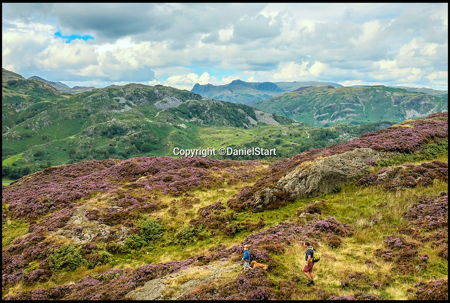 BNPS.co.uk (01202 558833)<br /> Pic: DanielStart/BNPS<br /> <br /> Holme Fell in the Lake District in Cumbria.<br /> <br /> They are two of country's hottest holiday destinations, visited by millions of tourists each year - but now a new book has revealed the hidden gems of the Lake District and Yorkshire Dales.<br /> <br /> The guide turns its back on hotspots like Lake Windemere, Coniston, Kendal and Bowness, instead unveiling more than 400 of the best kept secrets of Britain's most popular national parks, found only off the beaten track.<br /> <br /> It lifts the lid on hidden waterfalls, huge caverns, forgotten tunnels, secret valleys and islands, bothy huts, lost ruins, magical meadows and ancient forest away from the tourist trail.<br /> <br /> The Wild Guide to the Lake District and Yorkshire Dales is published by Wild Things Publishing on June 1 and costs £15.99.
