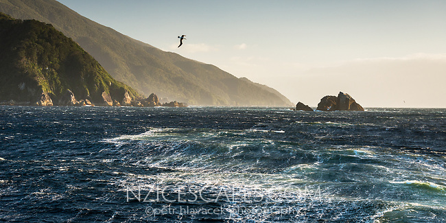 Entrance into Doubtful Sound with seagul, Fiordland National Park, Southland, UNESCO World Heritage Area, New Zealand, NZ