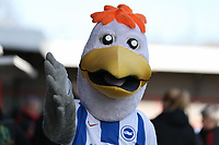 The Brighton mascot ahead of Brighton & Hove Albion Women vs Manchester United Women, SSE Women's FA Cup Football at Broadfield Stadium on 3rd February 2019