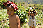 Two kids carry home a modest harvest of vegetable on their head. They're looking hot and tired.