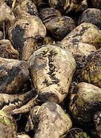 Bruce Udale, Eyton House Farm, Eyton, Telford, Shropshire. Sugar beet, oilseed rape, ploughing, harvesting.