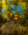 Autumn Reflection, Beaver Creek, Arizona ©2017 James D. Peterson.  Fall color has come and gone in the higher elevations by now, but it starts later and lasts longer here in the Verde Valley.  And it can be very captivating.<br /> <br /> The central Arizona territory in which I live is mostly considered a desert, but it is far from barren.  Creeks and washes are lined with large, deciduous trees (e.g., cottonwoods, sycamores, oaks), and they teem with wildlife.  They make elegant and serene settings in which to soak up their inherent natural beauty.<br /> <br /> My camera was irresistibly drawn to this rhapsody of floating leaves plus reflections of the trees they fell from, gently brushed with beams of sunlight filtered through the branches above.  Monet would have felt right at home here.
