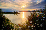 Washington, Blaine. Looking over the Boundary Waters of Semiahmoo Bay framed by wild roses, towards Kwomais Point in British Columbia. Rays of evening light shine through clouds.
