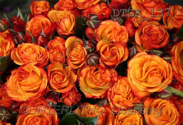 Gisela, FLOWERS, photos(DTGK137,#F#) Blumen, flores, retrato
