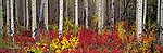 A colorful autumn landscape, Grand Teton National Park, Wyoming, USA.
