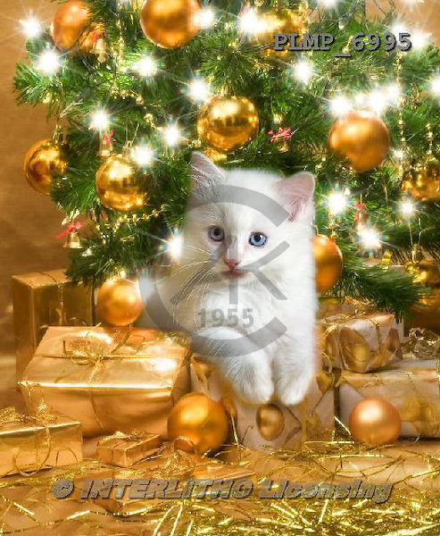 Marek, CHRISTMAS ANIMALS, WEIHNACHTEN TIERE, NAVIDAD ANIMALES, photos+++++,PLMP6995,#XA#