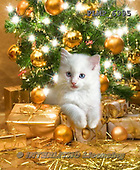 Marek, CHRISTMAS ANIMALS, WEIHNACHTEN TIERE, NAVIDAD ANIMALES, photos+++++,PLMP6995,#XA#