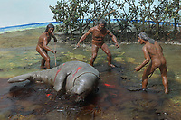 Model of indigenous people hunting a manatee for its meat and bones in a mangrove swamp, in the Museo del Hombre Dominicano, founded in 1973 and designed by Jose Antonio Caro Alvarez, on the Plaza de la Cultura in the Colonial Zone, in Santo Domingo, capital of the Dominican Republic, in the Caribbean. Columbus confused this animal with a mermaid, calling it a sea cow in Montecristi in 1493. The manatees are now endangered and protected. The museum houses collections on the culture of the Precolumbian Taino people. Santo Domingo's Colonial Zone is listed as a UNESCO World Heritage Site. Picture by Manuel Cohen