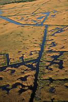 Common Reed<br /> Phragmites australis