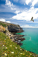 Tairoa Head Lighthouse at the entrance to Otago Harbour | Seagull flying | Blue sky | flowers | blue sea | Otago South Island New Zealand