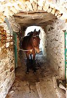 Donkey in the narrow streets of  Komiaki Hill village