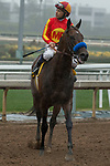 ARCADIA, CA  MARCH 10: #4 McKinzie, ridden by Mike Smith, watching the replay of the San Felipe Stakes (Grade ll) on March 10, 2018, at Santa Anita Park in Arcadia, CA.(Photo by Casey Phillips/ Eclipse Sportswire/ Getty Images)