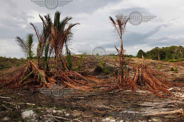 Cleared land at a palm oil plantation.