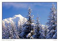 A snowy morning in Juneau, Alaska with Mt. Bullard in the background