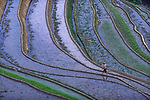 Pictured:  A ricefield in the Guangxi province.<br /> <br /> Rice fields on the side of a mountain reflect the changing colours of the sky in a series of evocative photographs.  The warm air on the valley floor rises up the mountain slopes and causes the water in the rice fields to evaporate and form steamy clouds which float across the land.<br /> <br /> The glassy surface of the shallow water reflects the sun and creates a patchwork of coloured pools across the mountainous region of the Guizhou and Yunnan provinces of Southwest China.  Rice terraces in the area are abundant and every inch of arable land is cultivated and transformed into an intricate and extensive network of terraced rice paddies.  SEE OUR COPY FOR DETAILS.<br /> <br /> Please byline: Alessandra Meniconzi/Solent News<br /> <br /> © Alessandra Meniconzi/Solent News & Photo Agency<br /> UK +44 (0) 2380 458800