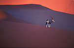 Gemsbok (Oryx antelope) crossing sand dunes at sunset, Namib Desert, Sossusvlei, Namibia
