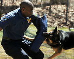 Manchester K9 Officer Rob Johnson plays the suspect as Manchester Police K9 Marco makes the grab, Saturday, April 25, 2009, during a demonstration by the Manchester Police K9 unit at Mount Nebo Park in Manchester. (Jim Michaud/Journal Inquirer)