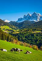 Italien, Suedtirol (Trentino - Alto Adige), Dolomiten, Villnoesstal, oberhalb Bergdorf St. Peter: Almwiese vor der Geislergruppe im Naturpark Puez-Geisler | Italy, South Tyrol (Trentino - Alto Adige), Villnoess Valley, above mountain village St Peter: mountain pasture with Le Odle mountains at natural park Puez-Odle