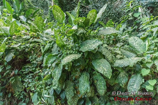 Plants, Entebbe Botanical Gardens