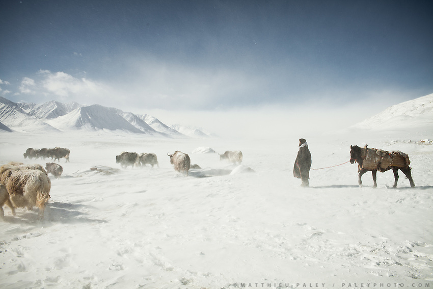 A shepherd with his horse, herding his yaks near frozen Chakmaktin (meaning Flint Stone) Lake..In and around Ech Keli, Er Ali Boi's camp, one of the richest Kyrgyz in the Little Pamir...Trekking with yak caravan through the Little Pamir where the Afghan Kyrgyz community live all year, on the borders of China, Tajikistan and Pakistan.