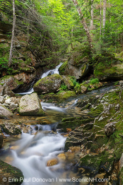 Cascade on Cold Brook in Randolph, New Hampshire during the summer months. This is the lower section of a series of cascades that is in the area where the forgotten Tertia Cascade is thought to be. It is unknown what cascade is the named cascade.