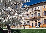 Magnoliarosnącana Deptaku, przy Starym Domu Zdrojowym.