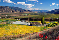 Vineyards in South Okanagan Valley, BC, British Columbia, Canada, Autumn / Fall
