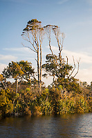 Gillespies Lagoon with native forest,, Westland Tai Poutini National Park, West Coast, World Heritage Area, New Zealand
