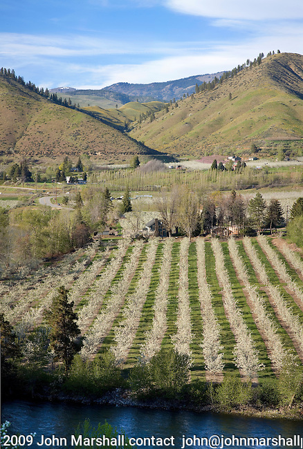 Composite image of pear orchard near Cashmere, WA as seen from south side of Wenatchee River.  April 21, 2009.  Looking north.  Chelan County, Wenatchee Valley.