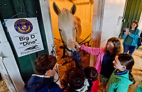 BALTIMORE, MD - MAY 16: Fans on the Breakfast at Old Hilltop tour visit with Big D the police horse on the backsides during preparations for the Preakness at Pimlico Race Course on May 15, 2018 in Baltimore, Maryland (Photo by Scott Serio/Eclipse Sportswire/Getty Images)