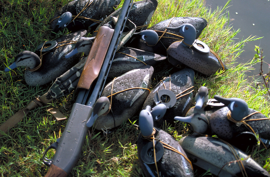 Blue-winged teal cork decoys with shotgun
