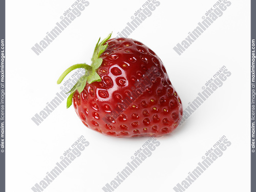 Closeup of a red organic homegrown freshly picked strawberry with a green stem isolated on white studio background