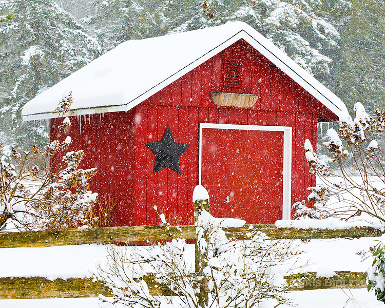 A red shed with a black star on it is covered in the snow with a snow covered trees in the background and split rail fence in front with snow piled up in a Wintry scene reminiscent of Christmas.