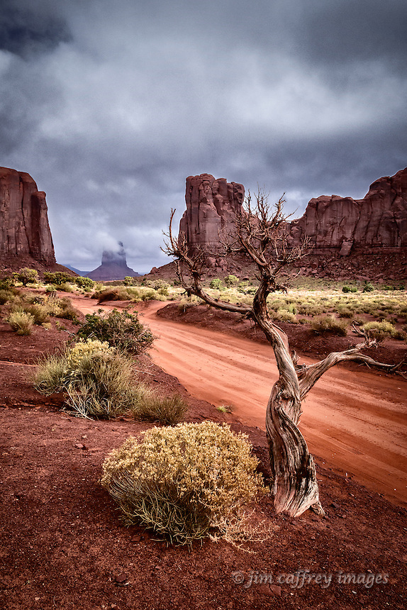A dead juniper tree along the road to the North Window in Monument Valey