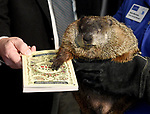 Chuckles  the Ninth in sworn in to his duties,  the groundhog who was making his first appearance in his new job as the official state groundhog, Friday, Feb. 2, 2018, at the Lutz Children's Museum in Manchester. (Jim Michaud / Journal Inquirer)