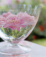 Detail of dahlia and rose heads floating in a glass vase